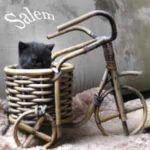 salem1-150x150 Breeding