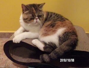 101_0987-300x230 Sandezia - produkty kartonowe dla kotów