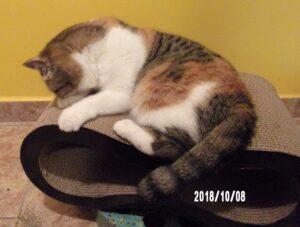 101_0988-300x227 Sandezia - produkty kartonowe dla kotów