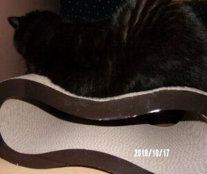 101_1119-300x253 Sandezia - produkty kartonowe dla kotów