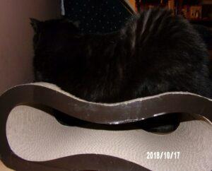 101_1121-300x242 Sandezia - produkty kartonowe dla kotów