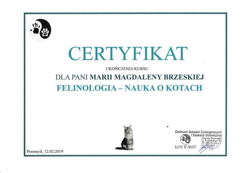 felinolog-1024x707 Ukończone kursy