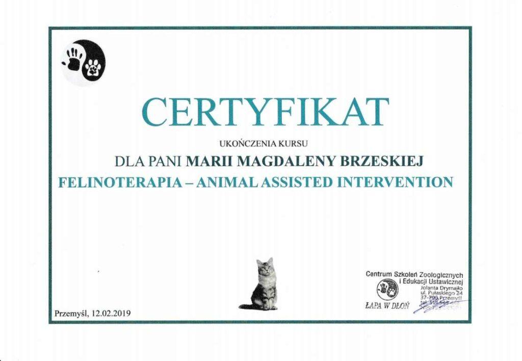 felinoterapia-1024x708 Ukończone kursy