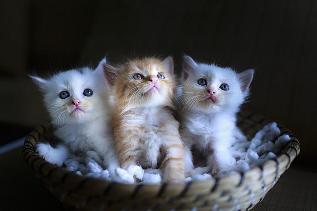 cat-3266675_640 Po co kotom tauryna?