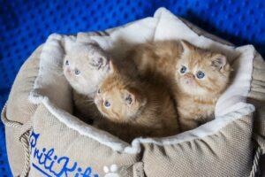 IMG_0086-300x200 Czy legowisko dla kota jest potrzebne?