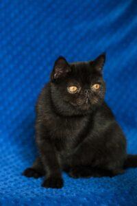 IMG_9852-200x300 Czy czarny kot przynosi pecha?