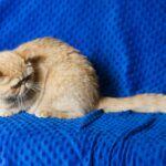 IMG_0162-150x150 Breeding