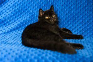 IMG_9864-300x200 Czy czarny kot przynosi pecha?