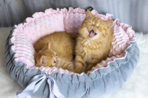 IMG_2567-300x200 Czy legowisko dla kota jest potrzebne?