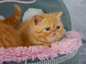 IMG_6896-300x224 Wyprawka dla kociaka