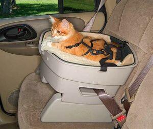 TD-with-cat-web-300x254 Bezpieczeństwo kota w samochodzie