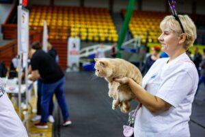 IMG_9101-300x200 Międzynarodowa Wystawa Kotów Rasowych - Pruszków 2019