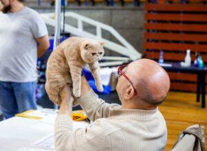 IMG_9642-300x219 Międzynarodowa Wystawa Kotów Rasowych - Pruszków 2019