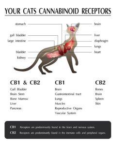 Schowek01-258x300 Olejek CBD dla kotów