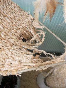 IMG_20210530_115454-225x300 Trwałość drapaków w naszej hodowli