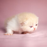 IMG_0558-150x150 Breeding