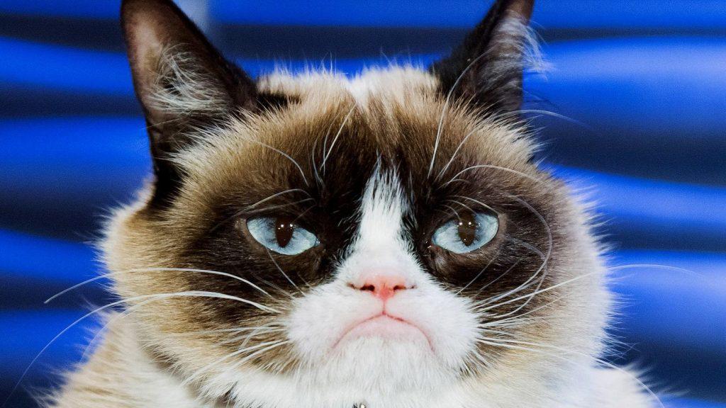 Culture-Grumpy-Cat-487386121-1024x576 Po co właściwie ten rodowód i jaki?