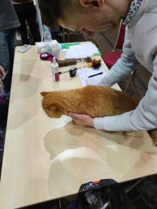 IMG20210829110413-225x300 Międzynarodowa Wystawa Kotów Kleszczów 2021