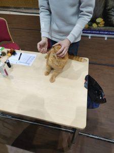IMG20210829110455-225x300 Międzynarodowa Wystawa Kotów Kleszczów 2021
