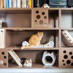 IMG_7296-150x150 Tak mieszkają nasze koty