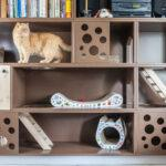 IMG_7303-150x150 Tak mieszkają nasze koty
